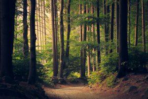 Rise forest header